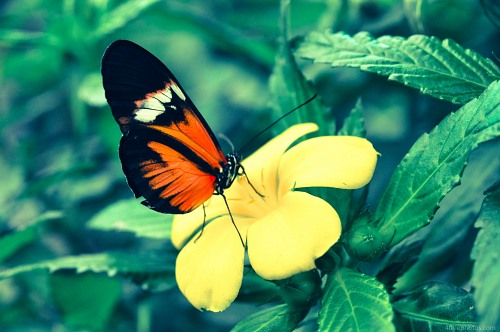 Butterfly yellow flower