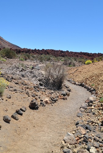 Desert path rocks