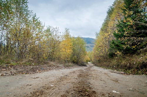Dirt road forest autumn