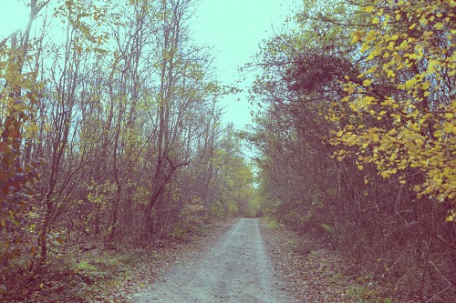Dirt road tracks in forest autumn