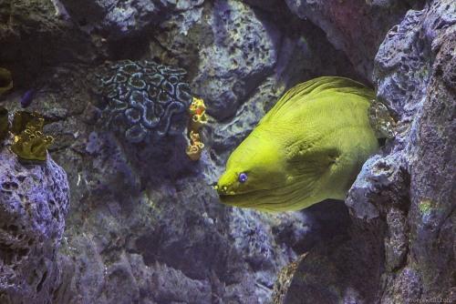 Eel reef