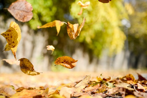 Falling leaves on ground