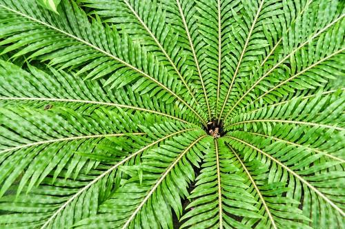 Fern leafs converging