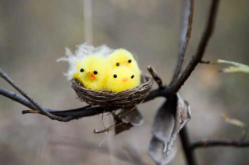 Fluffy bird offsprings in a tree branch nest