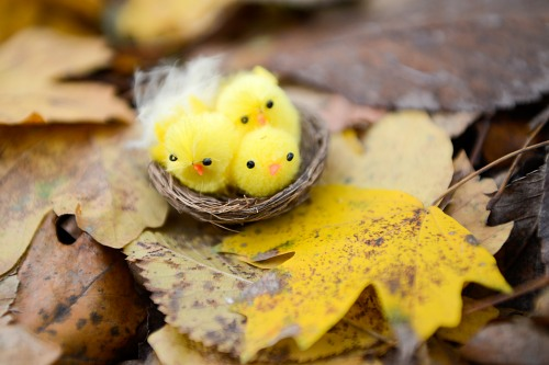 Fluffy yellow birds nest