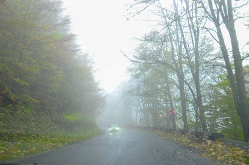Foggy autumn road