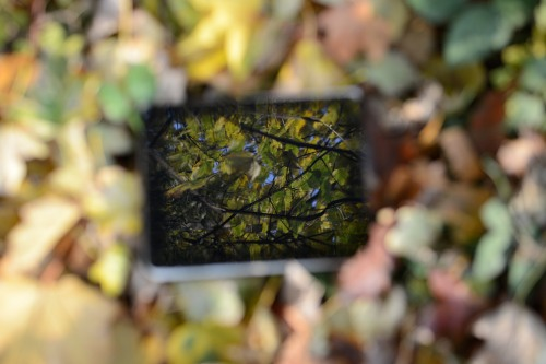 Forest reflection in tablet