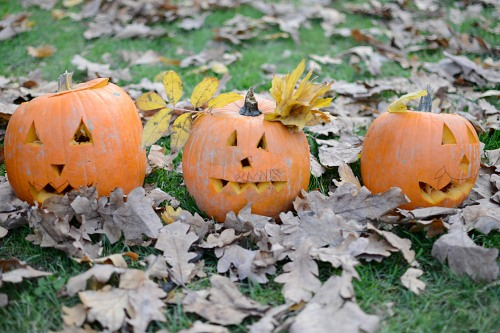 Funny Halloween pumpkins in the grass