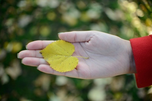 Hand holding autumn leaf