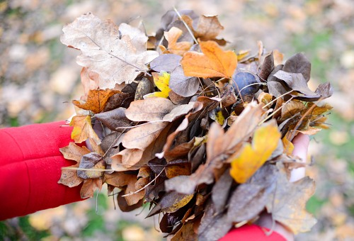 Holding pile of autumn leaves