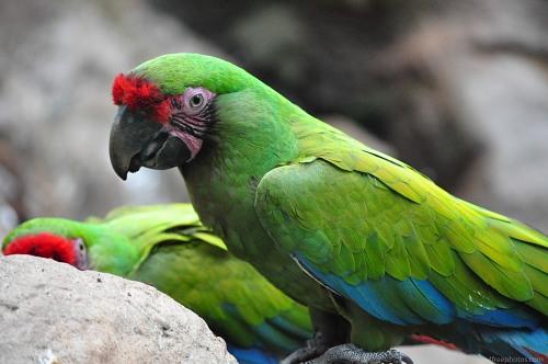 Large parrot bird