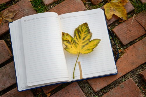 Maple autumn leaf open notebook