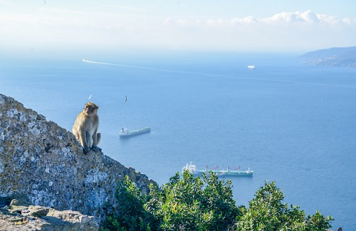Monkey Gibraltar rock sea