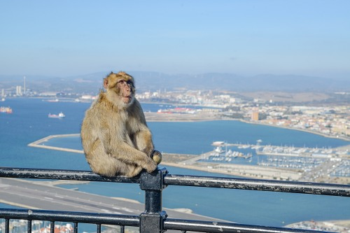 Monkey and port of Gibraltar