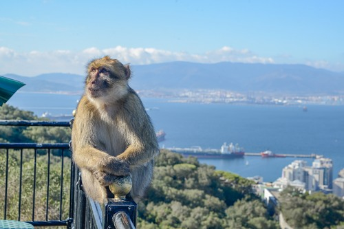 Monkey railing Gibraltar