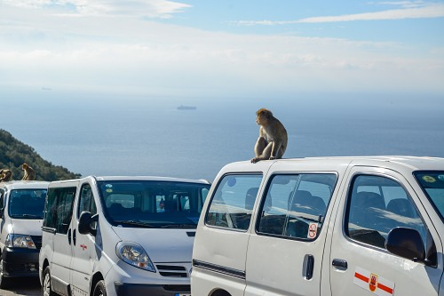 Monkey relaxing on a mini van Gibraltar