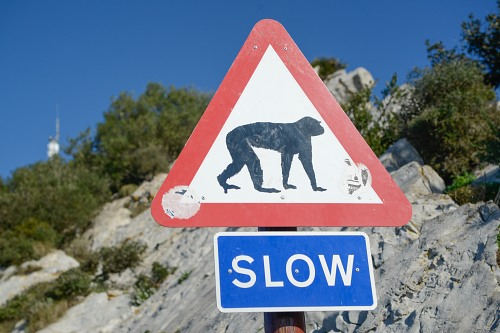 Monkey traffic sign