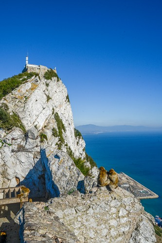 Monkeys and fortification on top of Gibraltar Rock