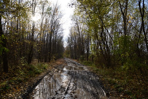 Muddy road in forest