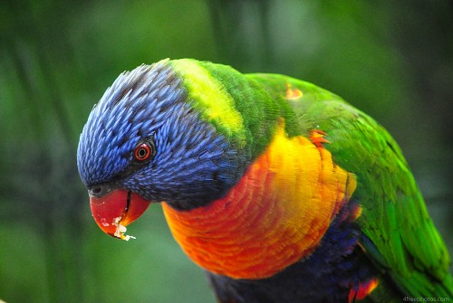 Multicolor parrot bird