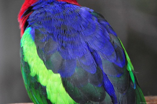 Multicolor parrot feathers