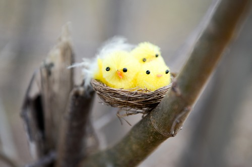 Nest on a branch