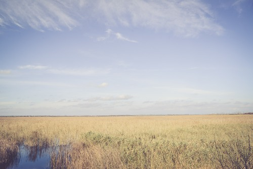 Open rural swamp landscape