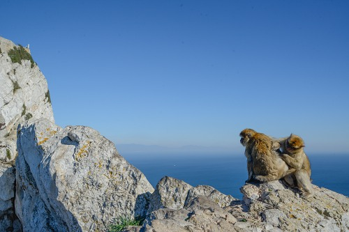 Pair of monkeys on top of Gibraltar rock