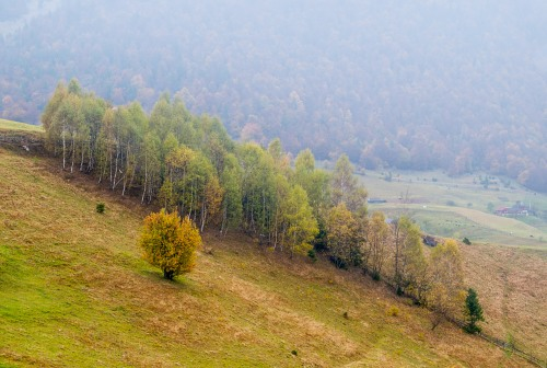 Row of autumn trees diagonal hill