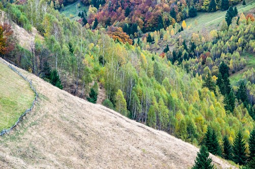 Row of multicolor trees on a hill