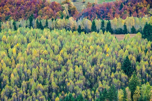 Row of yellow trees