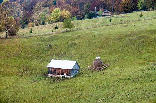 Rural landscape farm shed