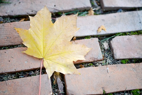 Single autumn leaf on park alley bricks