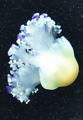 Single isolated jellyfish