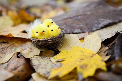 Small cute yellow birds nest