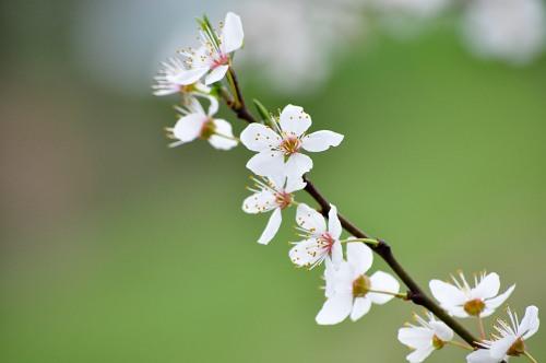Spring branch bloomed