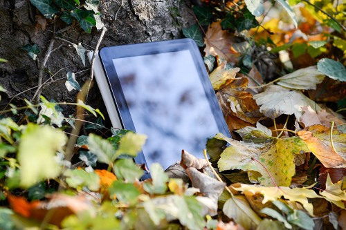 Tablet next to tree in forest