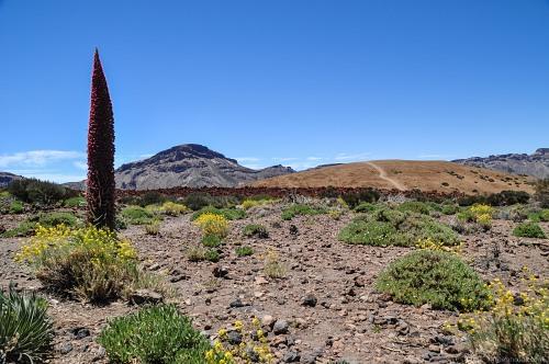 Tall desert plant