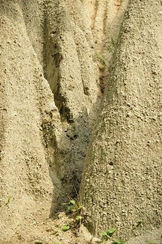 Tall sand dune