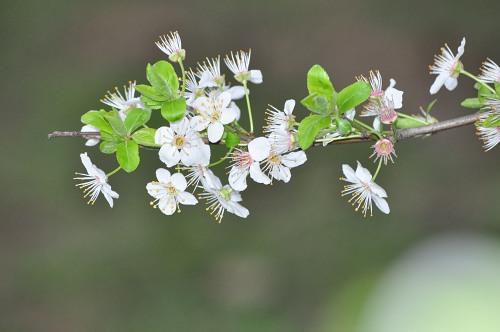 Tree branch blossom