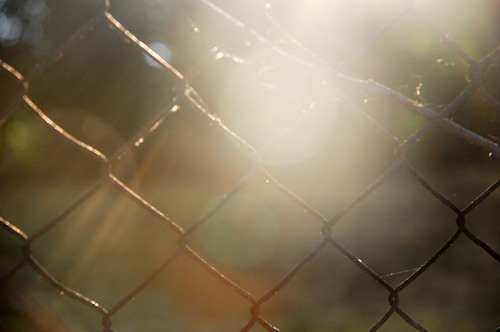 Wire fence at sunset