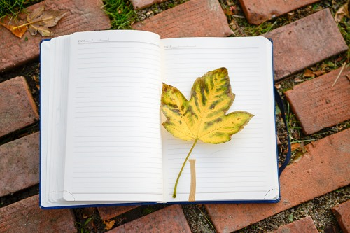 Yellow autumn leaf in open notebook