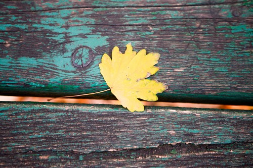 Yellow autumn leaf old wood