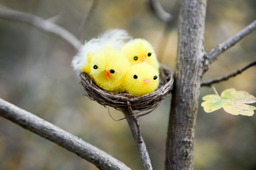 Young fluffy bird offsprings in nest