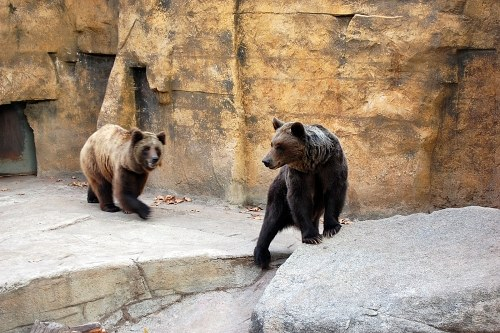 A pair of bears
