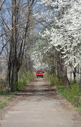 Free photos: Alley in spring