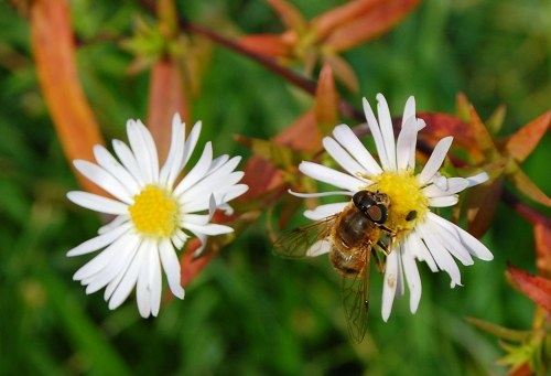 Free photos: Bee landend on a flower