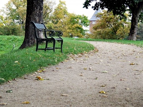 Bench in park whit trail passing in front