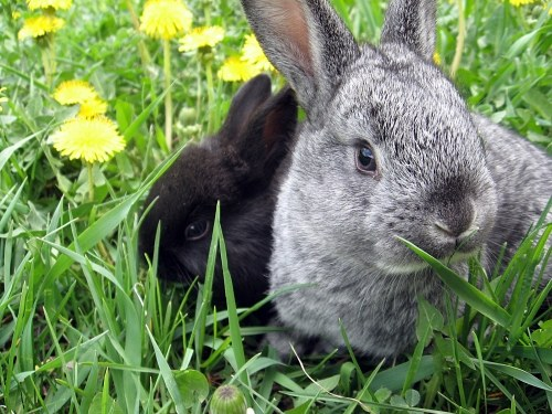 Free photos: Bunny in the grass