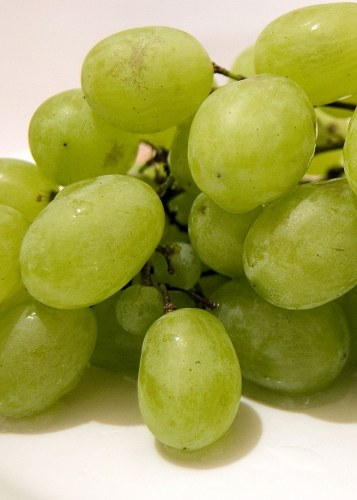 Grapes closeup